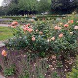 Rosengarten im Stadtpark in Hamburg