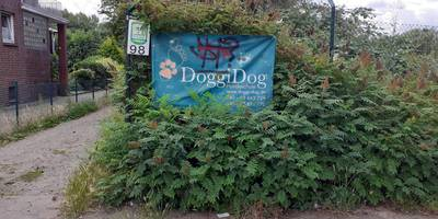Hundeschule Doggi Dog in Hamburg