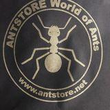 Antstore World of Ants Fachhandel für Ameisen in Berlin
