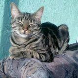 Profilbild von Katze-internetbox