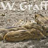 WILDPARK GANGELT in Gangelt