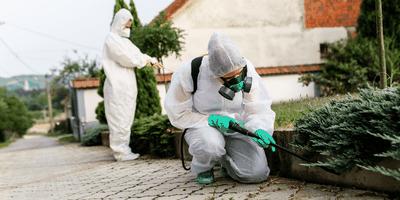 Fix Schädlingsbekämpfung in Aachen