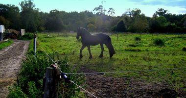 Pferdepension Gatz in Falkensee