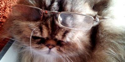 Hafemeister Birgit Dr. Tierarztpraxis für Augenheilkunde in Buchschlag Stadt Dreieich