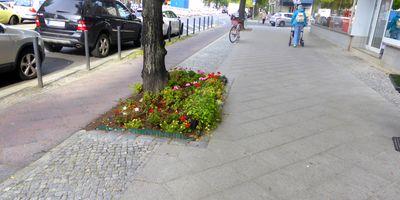 Straßenbäume-Baumscheiben in Berlin