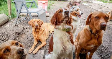 Hundetagesstätte Hundsviecherlgaudi in München