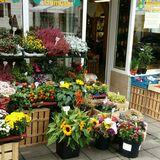 Barfüßer Lorenz Blumen Gemüse in Weilheim in Oberbayern