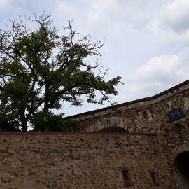 Festung Ehrenbreitstein in Koblenz am Rhein