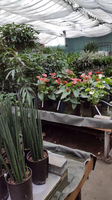 Bilder und fotos zu mallmann blumen hydrokultur in mendig for Blumen hydrokultur