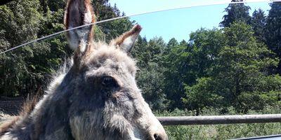 Wild-und Erlebnispark Daun Stefan Bost, Diana Reichle GbR in Daun