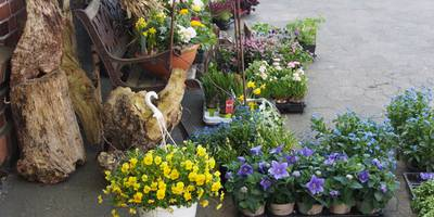 """Blumen Sörensen """"Blütenwerk"""" in Lensahn"""