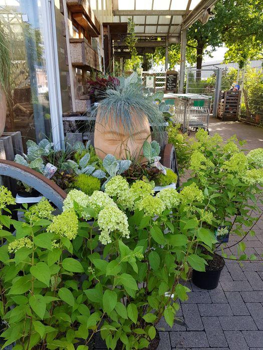 Gartencenter Wesergarten - 3 Bewertungen - Höxter