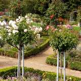 Planten un Blomen in Hamburg