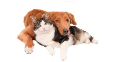 Tierarztpraxis Solveig Opp in Rüsselsheim