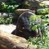 Zoologischer Garten Köln in Köln