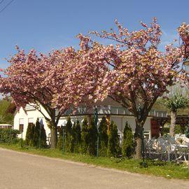 Gärtnerklause im Kleingartenverein in Weingarten in Baden