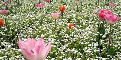 Blumen in Watenbüttel Inh. Gabriele Schramm in Braunschweig Watenbüttel