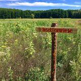 Naturdenkmal »Dorfeiche« Kieve in Kieve