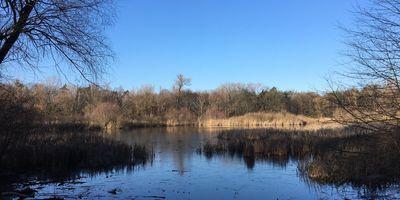 Naturschutzgebiet »Fauler See« in Berlin