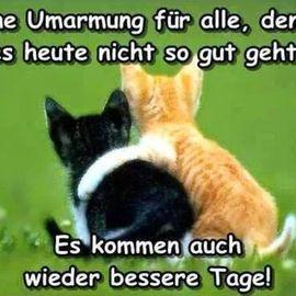Praxis für Klassische Katzenhomöopathie in Hannover - Dr. med. Nina Kenda in Hannover