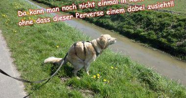 Tierphysiotherapie van Bebber in Rheinberg