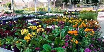 Wohlgemuth Pflanzen und Gartencenter in Beverungen