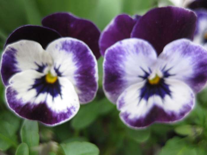 Gartenbau Erding albertshofer stefanie blumen und gartenbau 3 bewertungen erding