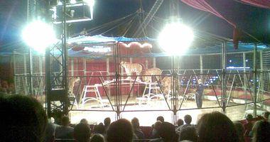 Zirkus Probst GmbH & Co.KG in Staßfurt