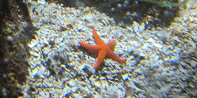 SEA LIFE Centre Speyer in Speyer