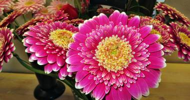 Blumenpracht Inhaber Renate Schmitt in Neumarkt in der Oberpfalz