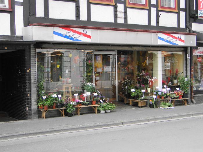 holland blumen discount glasbergen e k 1 foto northeim grafenhof golocal. Black Bedroom Furniture Sets. Home Design Ideas