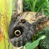 Schmetterlingspark Klütz in Klütz