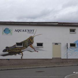 Aquaexot, Inh. V.Büchner in Jena