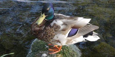 Naturschutzbund Deutschland e.V. (NABU) Wasservogelreservat Wallnau Informationszentrum in Wallnau Stadt Fehmarn