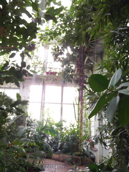 Bilder Und Fotos Zu Grosses Gewachshaus Wilhelmshohe Mhk In Kassel