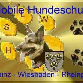 Active Dog Hundeschule Löb Wiesbaden - Mainz - Rheingau in Wiesbaden