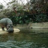 Zoo Berlin in Berlin