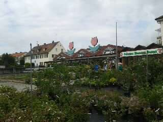Gartenbau Ansbach güth gartenbau floristik und pflanzen gärtnerei 2 bewertungen