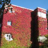 Friedrich-Ebert-Siedlung in Berlin