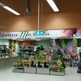 R.H. Blumen u. Pflanzenshop Gross- und Einzelhandels GmbH in Lohmar