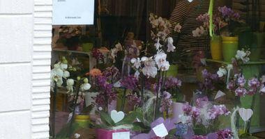 Blütenzauber Schuppert Blumenladen in Bad Laasphe