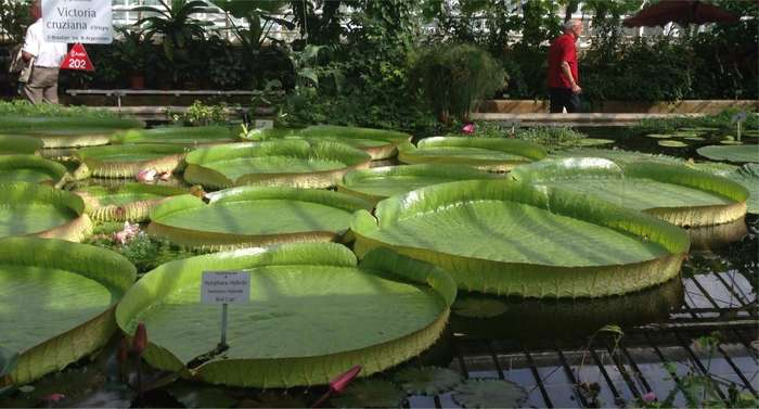 Botanischer Garten München-Nymphenburg in München - Das ...