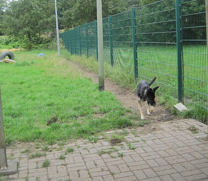 Tierschutzverein Herne Wanne