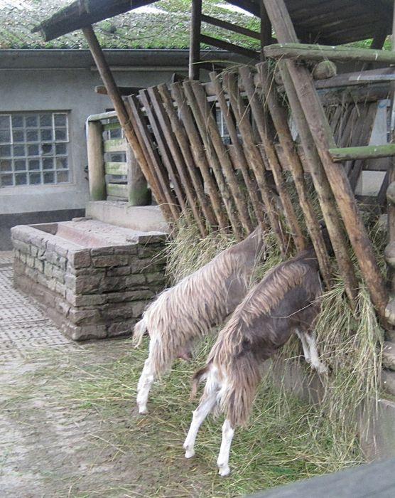 Tierpark wanne eickel adresse
