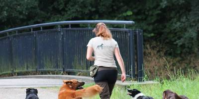Paradogs Hundetraining in Bremen