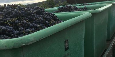 Heß Manfred Wein- und Obstbau in Fellbach