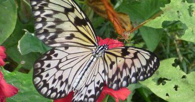 Schmetterlingspark Alaris GmbH in Buchholz in der Nordheide