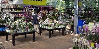 Pflanzen-Kölle Gartencenter GmbH & Co. KG Stuttgart in Stuttgart