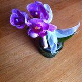Blume Ideal in Brake an der Unterweser