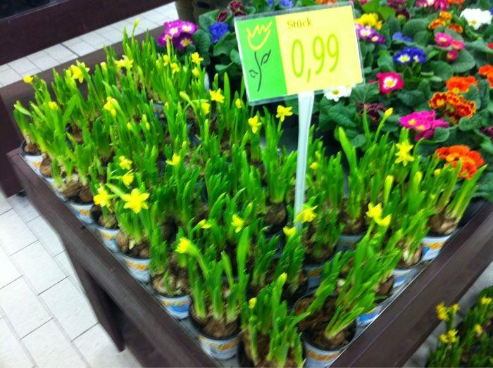 Blumenladen Delmenhorst